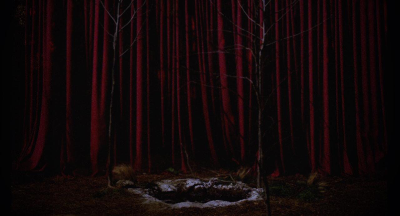 dark mood woods (full version)