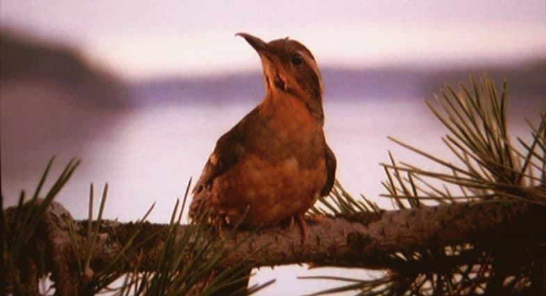 Twin Peaks opening montage bird