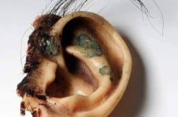 Blue Velvet ear