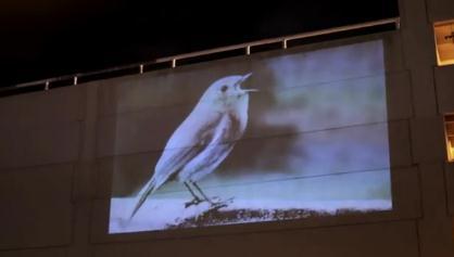 An Ear A Bird A Heart David Lynch S Intro For Chrysta