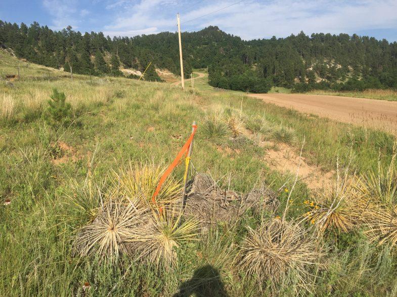 Twin Peaks - South Dakota GPS coordinates