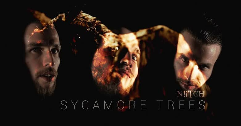 Sycamore Trees cover by Niitch
